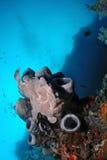在海绵的灰色青蛙鱼 免版税图库摄影
