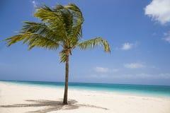 在海滩的热带棕榈树 免版税库存照片