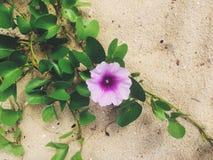 在海滩的热带花 免版税库存照片