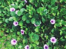 在海滩的热带花 免版税库存图片