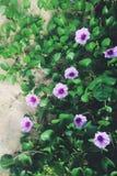 在海滩的热带花 库存照片