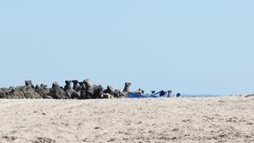 在海滩的热的天 股票视频