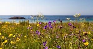 在海滩的狂放,美丽的花 库存图片