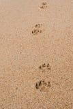 在海滩的狗印刷品 免版税库存照片