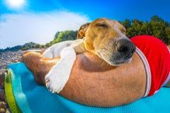 在海滩的狗和所有者午睡 免版税库存图片
