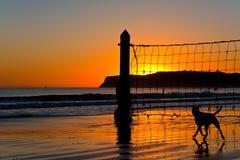 在海滩的狗在日落 免版税库存照片