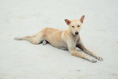 在海滩的狗在泰国 免版税库存照片