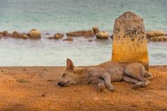 在海滩的狗睡眠 免版税库存照片