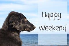 在海洋的狗,发短信给愉快的周末 免版税图库摄影