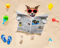 在海滩的狗读报纸 库存图片