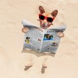 在海滩的狗读报纸 免版税库存照片