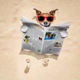 在海滩的狗读报纸 免版税图库摄影