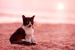 在海滩的猫选址 免版税库存图片