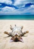 在海滩的猫 库存图片