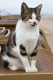 在海滩的猫 免版税图库摄影