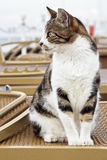 在海滩的猫 库存照片