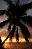 在海滩的现出轮廓的棕榈树,瓦努阿岛海岛,斐济 图库摄影