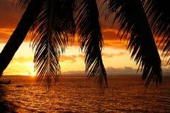 在海滩的现出轮廓的棕榈树,瓦努阿岛海岛,斐济 免版税图库摄影