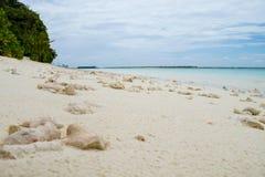 在海滩的珊瑚,印度洋 库存照片