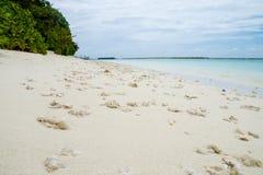 在海滩的珊瑚,印度洋 免版税库存图片