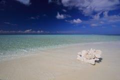 在海滩的珊瑚,马尔代夫 免版税库存图片