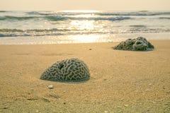 在海滩的珊瑚 库存图片