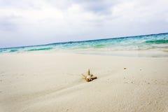 在海滩的珊瑚 免版税库存图片