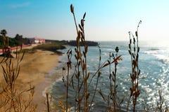 在海滩的生活 库存照片