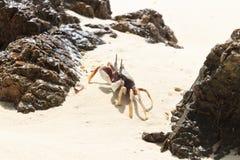 在海滩的白色螃蟹 免版税库存照片
