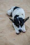 在海滩的睡觉狗 免版税库存照片