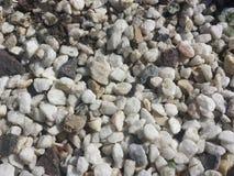 在海滩的石头 免版税库存图片