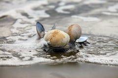 在海滩的碗 免版税库存图片