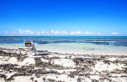 在海滩的空的太阳床在加勒比海 库存照片