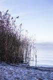 在海滩的第一霜 免版税图库摄影