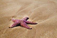 在海滩的红色海星 免版税库存图片