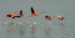 在海洋的红色火鸟和看见 图库摄影