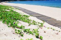 在海滩的线 免版税图库摄影
