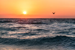 在海滩的美好的热带日出在海洋,墨西哥 免版税库存图片