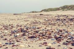 在海滩的美好的色的壳 免版税库存照片