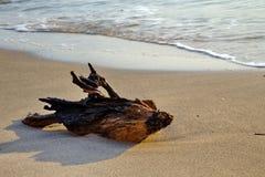 在海滩的老木头 免版税库存图片
