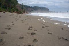 在海滩的脚印与波浪和风暴云彩在距离 免版税库存照片