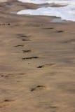 在海滩的脚印 库存图片