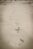 在海滩的脚步 免版税库存图片