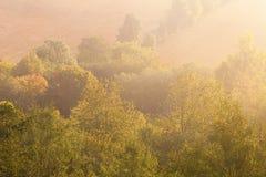 在海滩的芦苇在一个有雾的秋天早晨 免版税库存照片