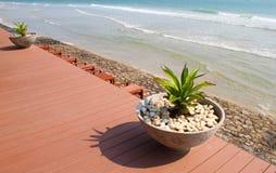 在海滩的花盆 免版税库存图片