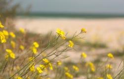 在海滩的花 蓝色海洋软的波浪沙滩的 背景 库存图片