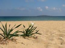 在海滩3的花 库存照片