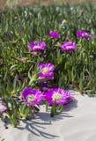 在海滩的花 图库摄影