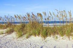 在海滩的草在沙丘 免版税库存图片