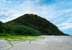 在海滩的草 免版税库存照片